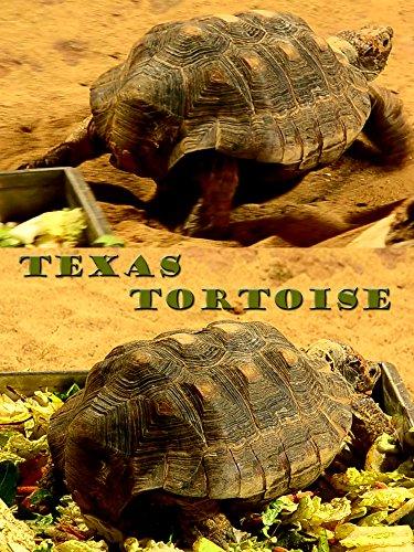 Clip: Texas tortoise