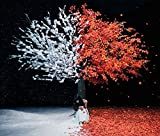 everlasting snow-Aimer