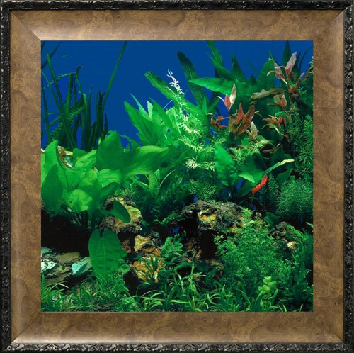 AquaVista AV500SBALE Wall-Mounted Aquarium AV 500 Seaweed Background with Leo Frame видеорегистратор artway av 711 av 711