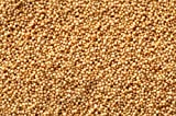 Amaranth Grain ~ 2 Lbs