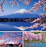 JAPAN - 桜 ポストカードセットB