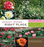 Right Rose, Right Place (1603424385) by Schneider, Peter