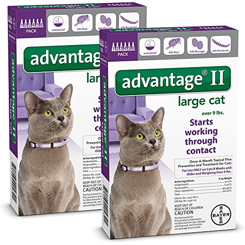 12 MONTH Advantage II Flea Control Large Cat (for Cats over 9 lbs.) (Advantage Multi For Kittens compare prices)