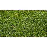 Perennial Ryegrass Seed Blend (500 sq ft) (Color: Eco Region, Tamaño: 500 sq. ft.)