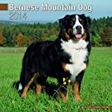 Avonside Publishing Bernese Mountain Dog 2014 (Calendar 2014)