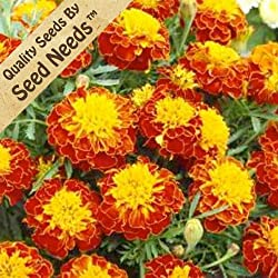 "200 Seeds, French Marigold ""Tiger Eyes"" (Tagetes erecta) Seeds By Seed Needs by Seed Needs"