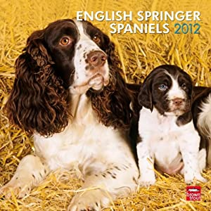 English Springer Spaniels (Intl) 2012 Square 12X12 Calendar (Multilingual Edition) BrownTrout Publishers Inc