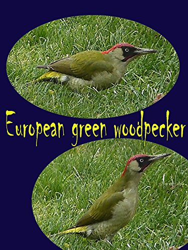 Clip: European green woodpecker on Amazon Prime Instant Video UK