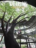 サムネイル:新建築、最新号(2011年6月号) 特集:保育のための空間