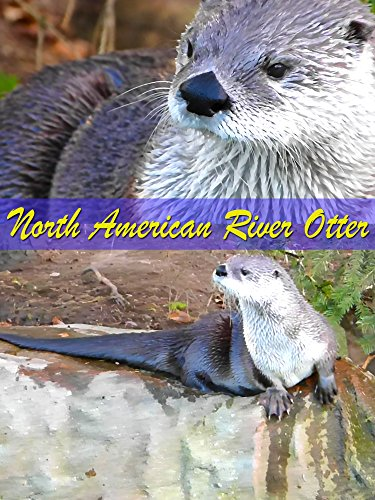 Clip: North American River Otter on Amazon Prime Instant Video UK