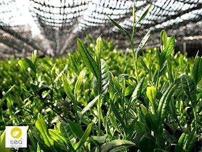 BIO Matcha Shots (hochwertiger japanischer Grüntee), Matcha to Go, 10 Sticks á 1g praktisch für unterwegs und im Büro, Energie Shot für den Tag von cosmopoliTEA® by tea exclusive auf Gewürze Shop