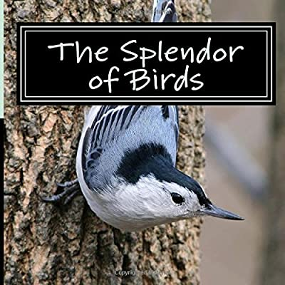 The Splendor of Birds: A Picture Book for Seniors, Adults with Alzheimer's and Others: Volume 5 (Picture Books for Seniors, Alzheimer's Patients, ... Reading Trouble and Others; A 'No Text' Book)
