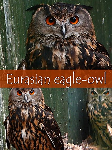 Eurasian eagle-owl on Amazon Prime Instant Video UK