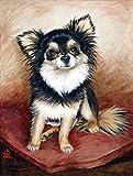 Chihuahua poil Long Taille MH1035GF Pavillon de jardin
