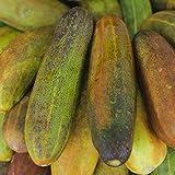 Biocarve Cucumber - Pack of 50 seeds