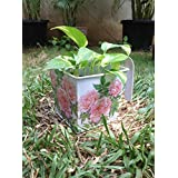 The Garden Store Decoupage Tin Planter Pink Flowers