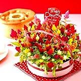 母の日ギフト 花鉢 花とスイーツ 生花(ケイトウ)とシフォンケーキ 人気グルメギフト