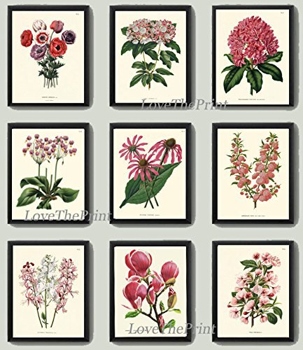 antique-pink-flowers-print-set-of-9-beautiful-hydrangea-rhododendron-magnolia-apple-tree-spring-summ