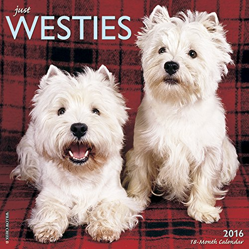 2016 Just Westies Wall Calendar