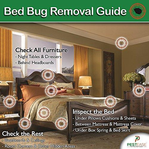 Pestease Bed Bug