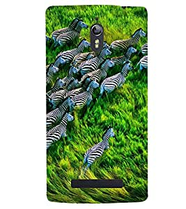 Printvisa Zebras Natures Beautiful Creation Back Case Cover for Oppo Find 7