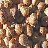 Indus Organic Raw Hazelnut, 1 Lb, Sulfite Free, Salt Free, Freshly Packed, Premium Grade