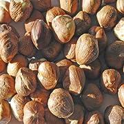 Indus Organic Raw Hazelnut