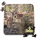 Angelique Cajams Safari Animals - Kruger Impalas up close - 10x10 Inch Puzzle (pzl_26844_2)