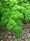 PARSLEY - TRIPLE MOSS CURLED 2 - 2500 ITALIAN SEEDS