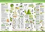 Grüne Smoothies Essenzposter für die...