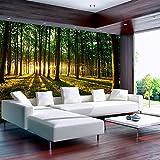 Vlies Fototapete 350x245 cm - 3 Farben zur Auswahl - Top - Tapete - Wandbilder XXL - Wandbild - Bild - Fototapeten - Tapeten - Wandtapete - Wand Wald Sonnenschein Bäume Natur Landschaft c-B-0027-a-b