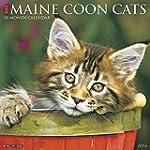 Just Maine Coon Cats 2016 Calendar