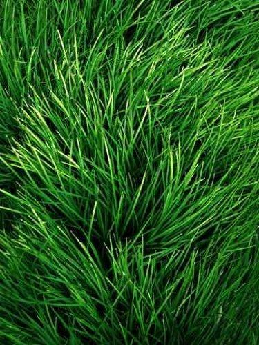 Herbs - 24