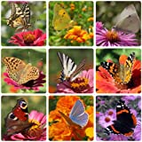 Earthcare Seeds Butterfly Garden Flower Seeds 1000 Seeds