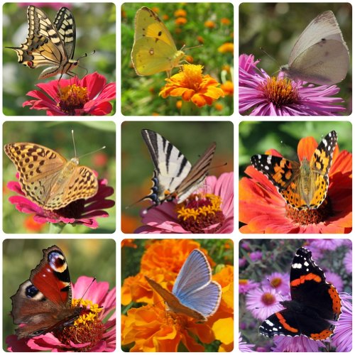 Earthcare Seeds Butterfly Garden Flower Seeds 1000