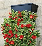 VertiGardenTM Wall Planter with Metal Frame and Brackets