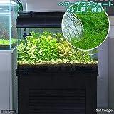 (水草 熱帯魚)おまかせ水上葉 レイアウトセット60cm水槽用 8種 +ヘアーグラスショート(無農薬)(水草説明書付) 本州・四国限定[生体]