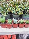 Jmbamboo-4 Different Aloe Plants – Ea…