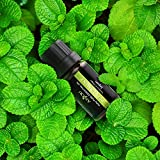 Essential Oils Anjou Top 6 Aromatherapy Oils 100% Pure & Therapeutic Grade - Basic Sampler Gift Set & Premium Kit, 6/10 ml (Lavender, Tea Tree, Eucalyptus, Lemongrass, Orange, Peppermint)