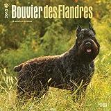 Bouvier Des Flandres 2015 Calendar
