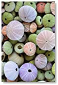 Colorful Sea Urchin Shells Journal: 150 page lined notebook/diary