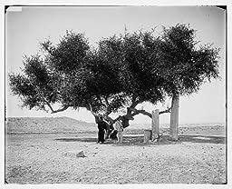Photo: Ancient boundary line at Raffah,between Egypt,Palestine
