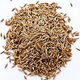 クミンシード 250g Cumin Seed Whole クミン 原型 スパイス ハーブ 香辛料 調味料 中華 業務用