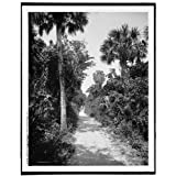 Photo: Bicycle path,ostrich farm,Palm Beach,Florida,FL,Det... Publishing Company,c1900