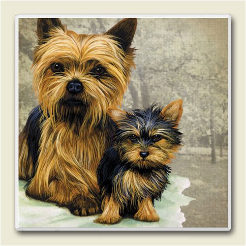 AbsorbaStone Coaster set~ Yorkshire Terrier ~4 Tile Drink Coasters ~ code 830C