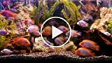 How to Pick a Fish Tank Filter
