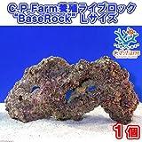 """(海水魚)C.P.Farm 養殖ライブロック""""BaseRock"""" Lサイズ 1個(形状お任せ) 本州・四国限定[生体]"""