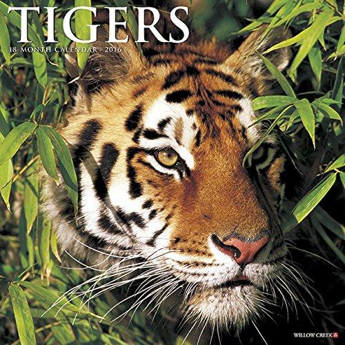 2016 Tigers Wall Calendar