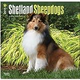 Shetland Sheepdogs 2015 Square 12x12