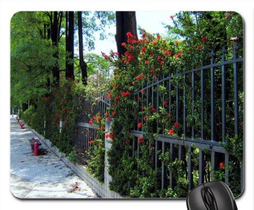 Summer Child Gates front-1022817